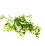 Ranunculus svazek - vínovo- zelený