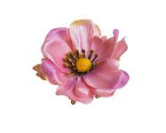Hlavička anemone 7 cm  - bílorůžová - 1ks