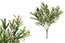 Buxus trs bílo- růžový