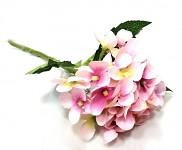 Hortenzie stvol mini - růžová
