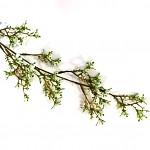 Větev s drobnými krémovými kvítky - 57 cm