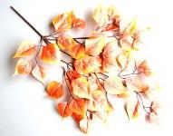 Podzimní větev s listy - bříza oranžová