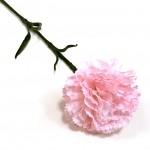 Karafiát - růžový - 47 cm