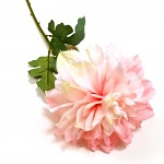 Jiřina stvol - růžovolososová - 58 cm