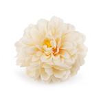 Jiřina stvol - tm.růžová s krémovým středem - 58 cm