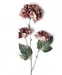 Hortenzie podzimní - 3 květy - vínová
