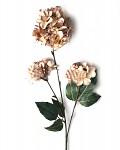 Hortenzie podzimní - 3 květy - sv.hnědá