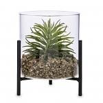 Sukulent ve skleněném květináči na stojánku - 13 cm