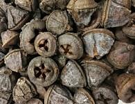 Eukalyptové zvonky - přírodní hnědé