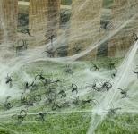 Pavouček černý - 1ks