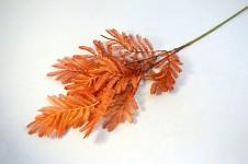 Kapradí zápich podzimní - oranžové
