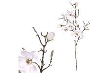Magnolie stvol s poupaty - krémová - 50 cm