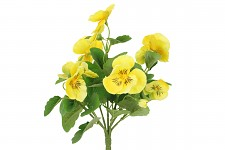 Maceška kytička - žlutá