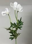 Cosmos zápich - 3 květy -  bílý