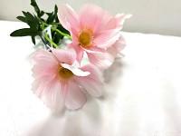 Cosmos zápich - 3 květy -  růžový