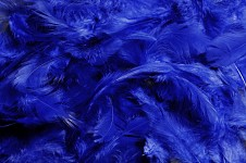 Peříčka barevná - tmavě modrá