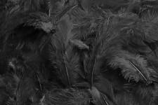 Peříčka barevná - černá