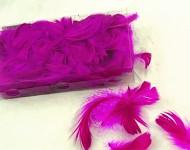 Peříčka barevná fuchsie - box