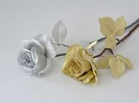 Růže zlatá - stvol