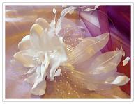Svatební ozdoba - květina bílá se síťkou