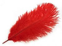 Pštrosí péro - červené