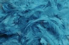Peříčka barevná - tyrkysová
