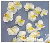 Bílá orchidej - minikvítek
