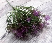 Česnek zápich 50 cm - fialový