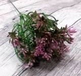 Česnek zápich 50 cm - růžový