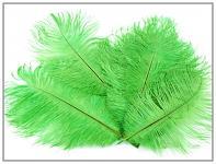 Pštrosí péro - zelené