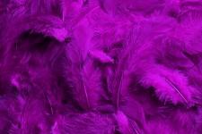 Peříčka barevná - tm.fialová