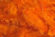 Peříčka barevná - oranžová