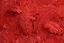 Peříčka barevná - červená