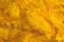 Peříčka barevná -tm. žlutá