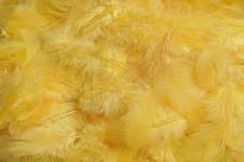 Peříčka barevná - žloutkově žlutá