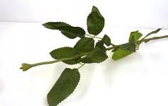 Stonek růže - zelený - základ