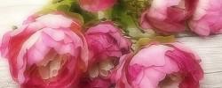 Kytice, květy se stonkem