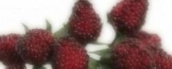 Umělé ovoce a přírodniny